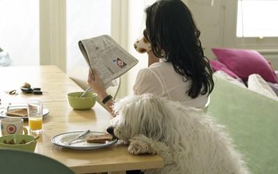5 съвета за почистване на дома с животни